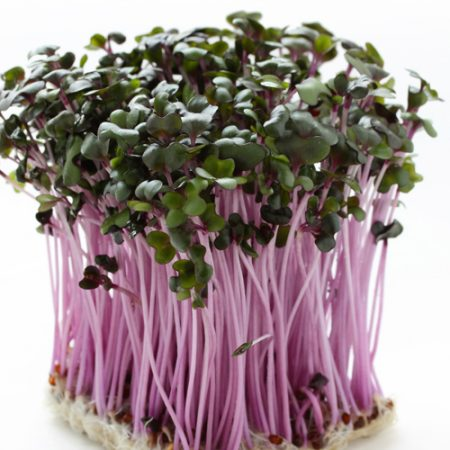 Red Sprouting cabbage1