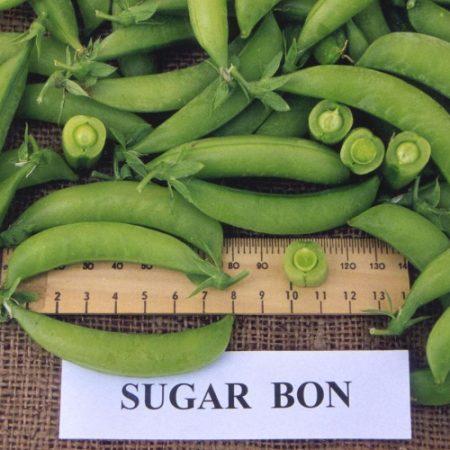 Sugar Bon